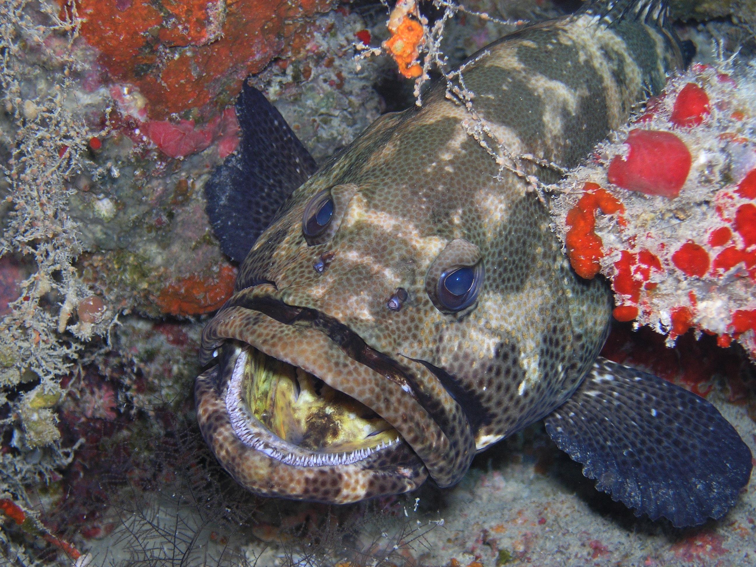 Park Hyatt Maldives Diving and Snorkeling - Grouper