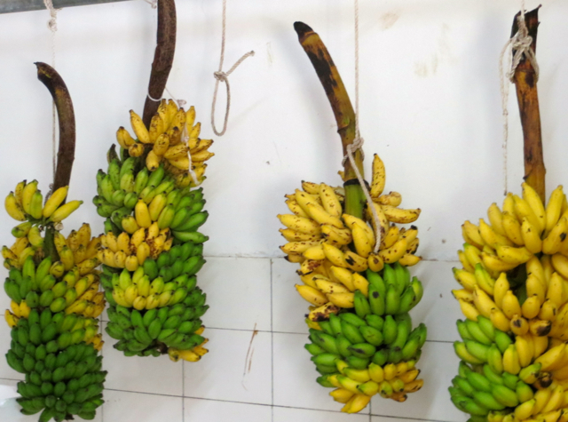 Park Hyatt Maldives Back of House Tour - Ripening Bananas