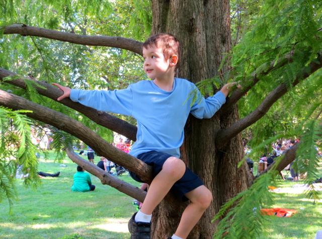 Governors Island - Climbing a Tree