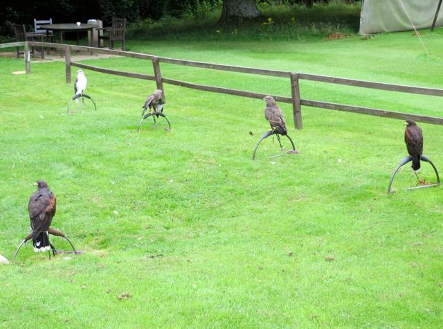 Dalhousie Castle Falconry - Birds of Prey on Perches
