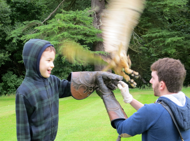 Dalhousie Castle Falconry - Calling Owl to the Glove