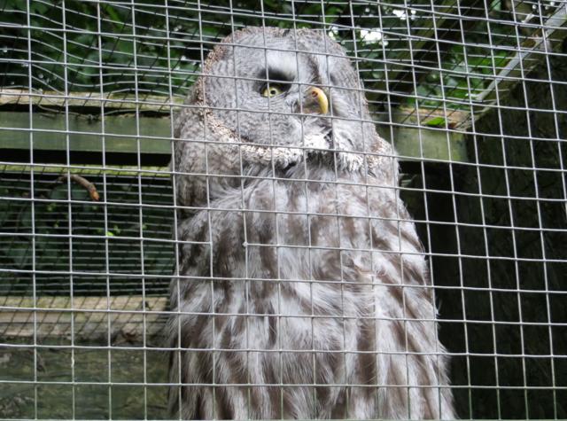 Dalhousie Castle Falconry - Owl