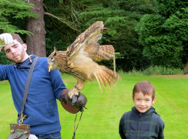 Dalhousie Castle Falconry Review - Feeding a Tawny Owl
