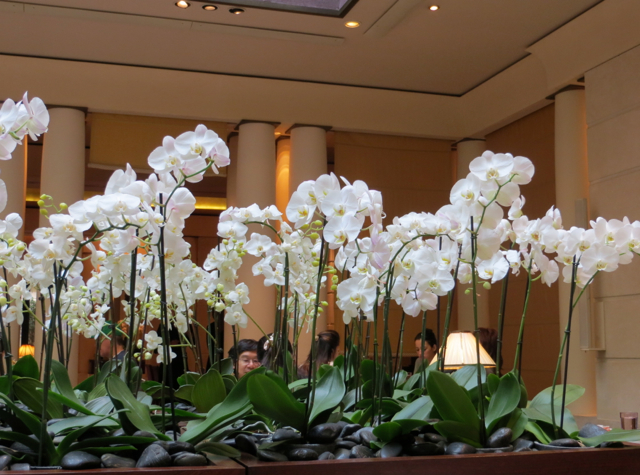 Park Hyatt Paris Breakfast Buffet Review - Orchids at Les Orchidees