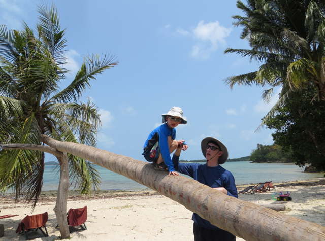 Koh Taen Snorkeling with Tours Koh Samui Review - Climbing a Coconut Tree