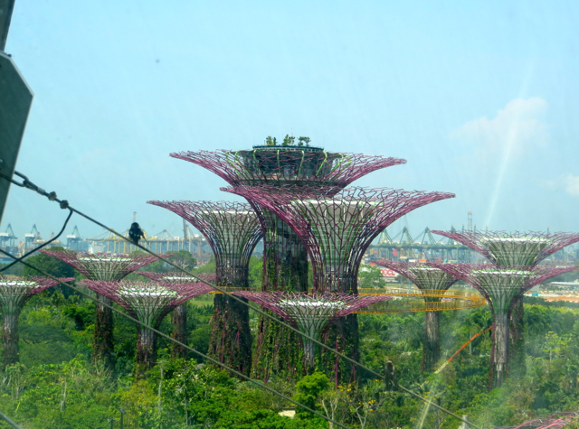 Singapore Gardens by the Bay Review - View of Supertrees from Cloud Forest Dome
