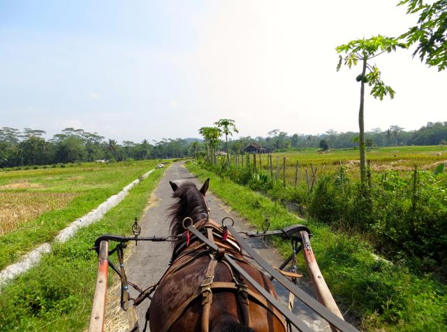 Andong Ride in Borobudur