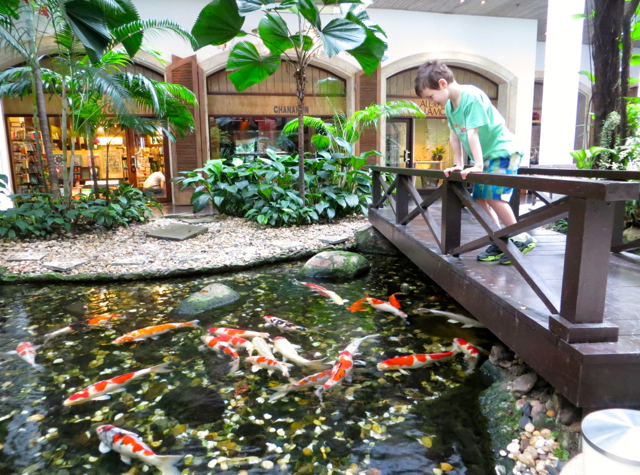 Four Seasons Bangkok Review - Beautiful Carp Pool