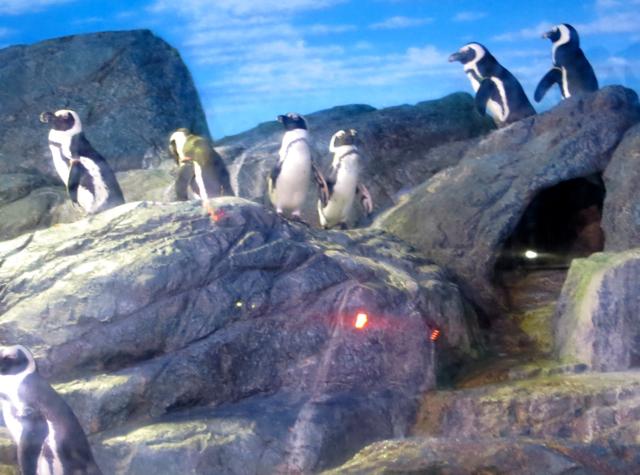 Siam Ocean World Bangkok Aquarium - Penguins