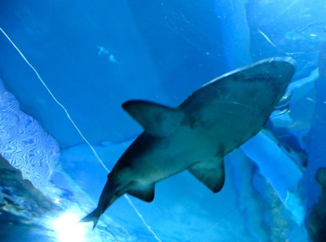 Siam Ocean World Bangkok Aquarium-Sharks