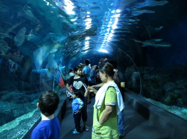 Siam Ocean World Bangkok Aquarium Tunnel
