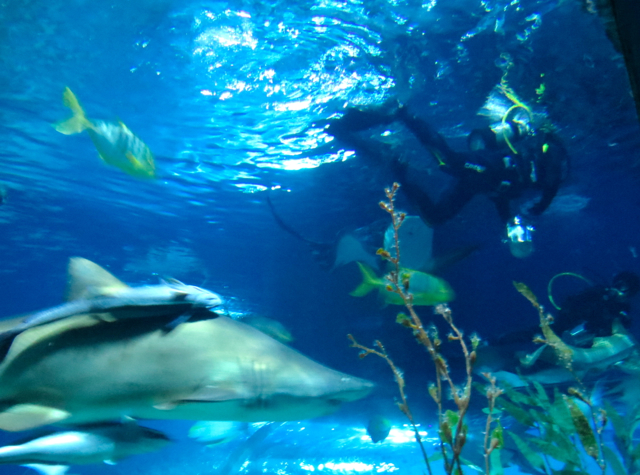 Siam Ocean World Bangkok Aquarium-Shark Feeding