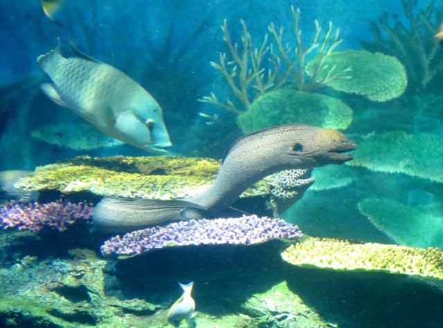 Siam Ocean World Bangkok Aquarium - Eel