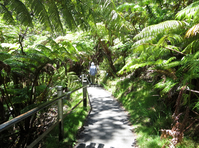 Hawaii Volcanoes National Park Review - Walk to Thurston Lava Tube