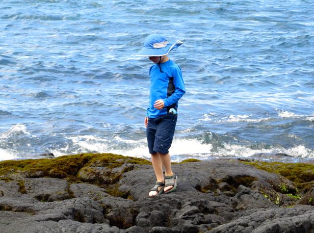 Punalu'u Black Sand Beach - Tidepooling
