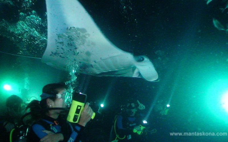 Manta Ray Night Dive, Kona, Hawaii